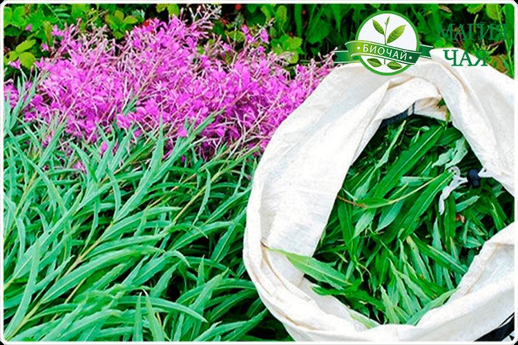 листья иван чая