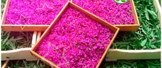 собранные цветы иван чая