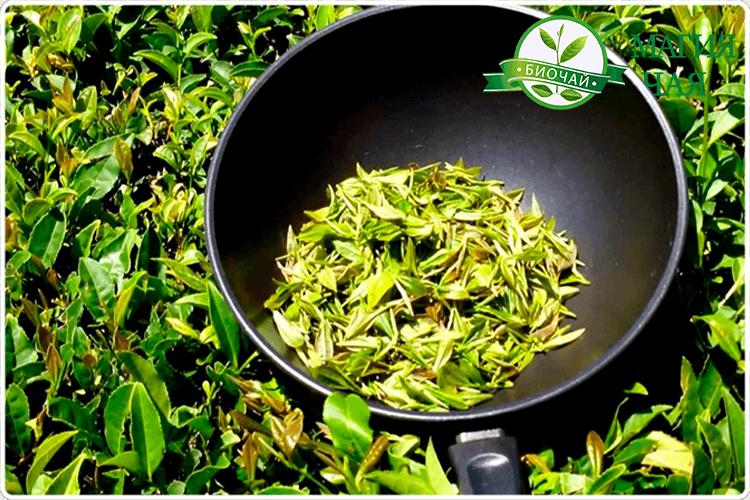 зеленый иван чай